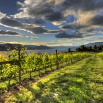Moraine Vineyard, Naramata