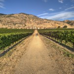 Sprit Ridge Vineyard